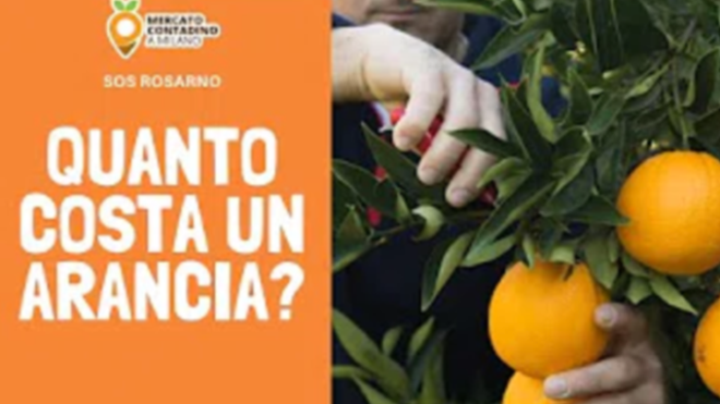 Quanto costa un'arancia?